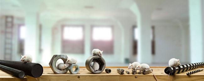 Mäuse mit verschiedenen Befestigungsmitteln