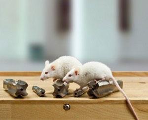 Mäuse auf Gewindeschneider