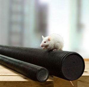 Maus auf Gewindestange