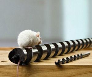 Maus auf Schlangenbohrer