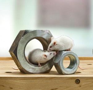 Mäuse in Muttern