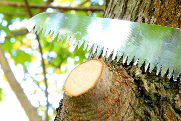 So gelingt der richtige Obstbaumschnitt