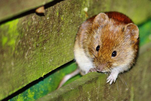 Ungebetene Tiere im Dach - BefestigungsFuchs Blog