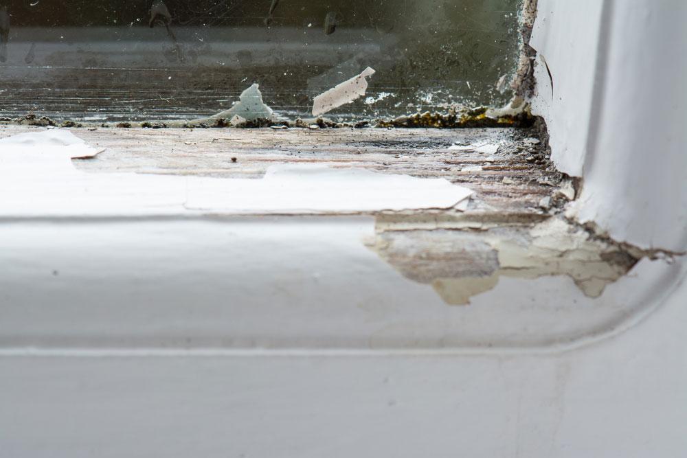 Top Fenster renovieren: Die Anleitung | BefestigungsFuchs AH49