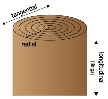 Hauptschwindrichtungen von Holz im Stammquerschnitt