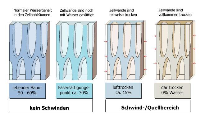 Schematische Darstellung des Quell- und Schwindverhaltens von Holz bei unterschiedlicher Holzfeuchte