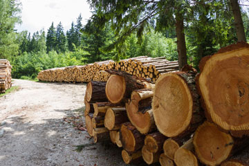 Das Schwinden und Quellen von Holz